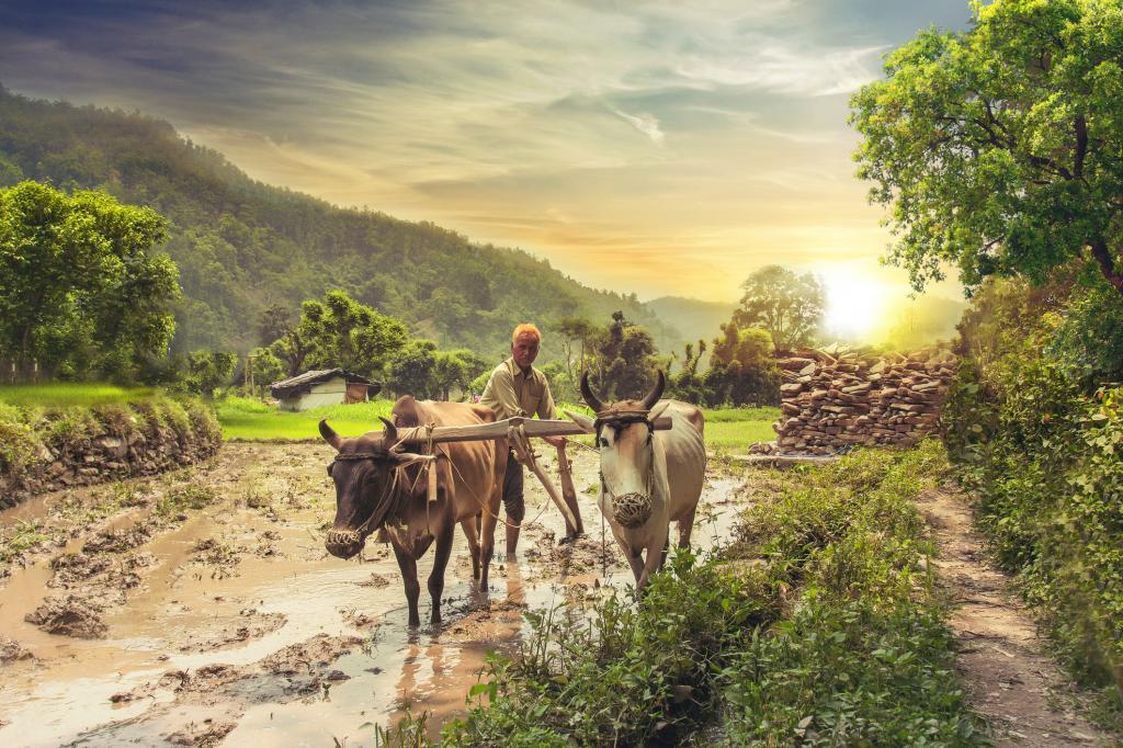 ಇಂಡಿಯಾ ವರ್ಸಸ್ ಭಾರತ: ಬಜೆಟ್ ಕೂಡ ಬಿಜೆಪಿಯ ವಿಭಜನೆಯ ಅಸ್ತ್ರ!